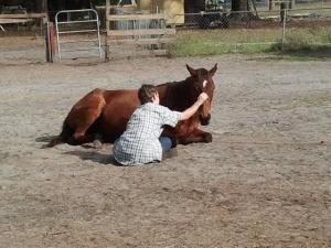 Save Healing Horses Pic