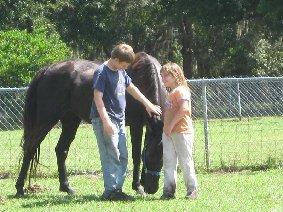 save Healing Horses